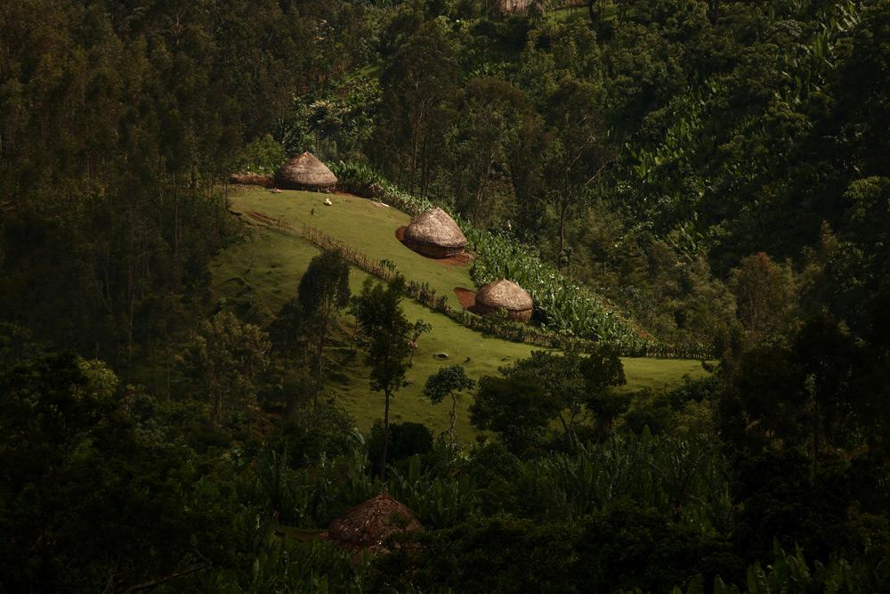 blog-agroforest-pg02.jpg