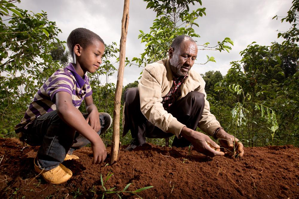 blog-agroforest-pg01.jpg