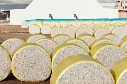 Australian Cotton JV Restructured