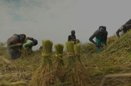 Enhancing Rice Production in Côte d'Ivoire