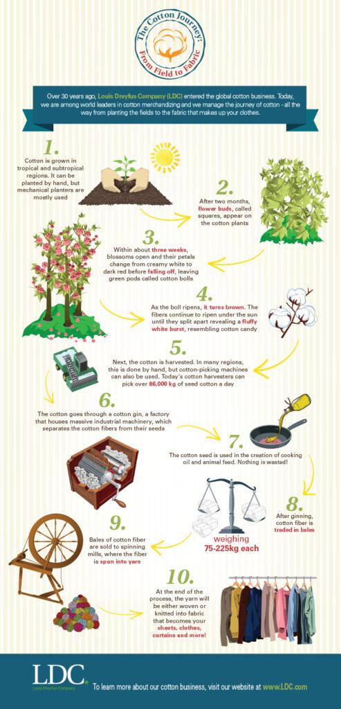 blog-pg-cotton-infographic03.jpg